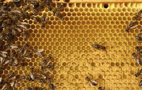 A la miel y al aceite