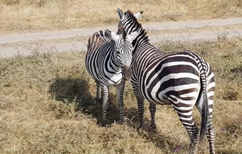 Tanzania y Zanzíbar increíble