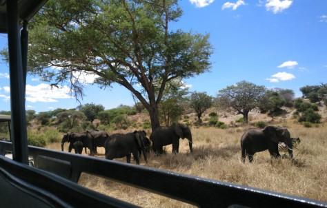Nuestra asesora María nos preparó un viaje perfecto a Tanzania