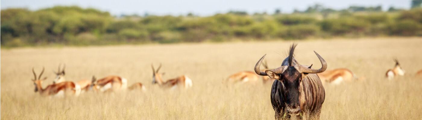Reserva de Kalahari Central