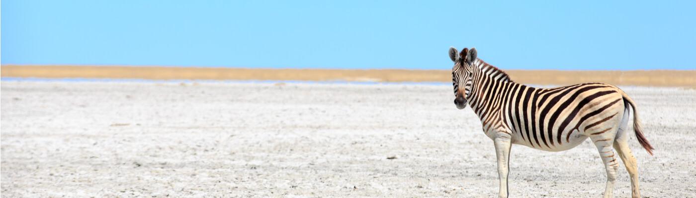 Salar de Makgadikgadi