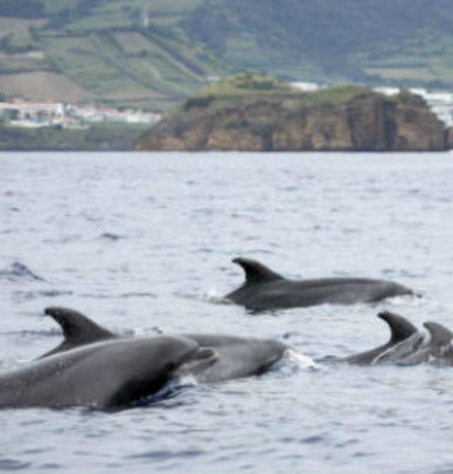 Avistamiento de ballenas en Portugal