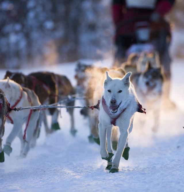 Excursión en moto de nieve, o en trineo de perros