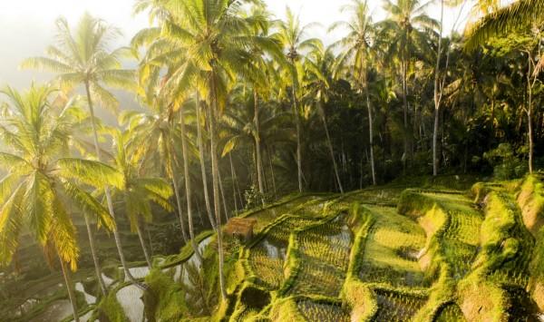 Viaje a Indonesia - Viajes de relax en Bali. Viaje a Indonesia con PANGEA The Travel Store