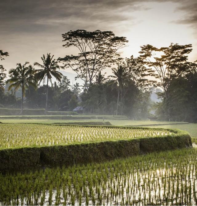 Arrozales de Ubud en Indonesia