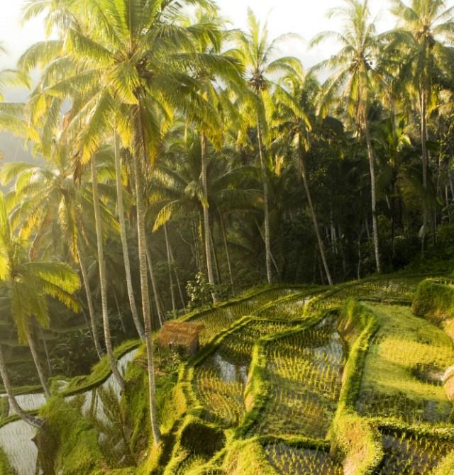 Viaje a Indonesia - Viajes de relax en Bali