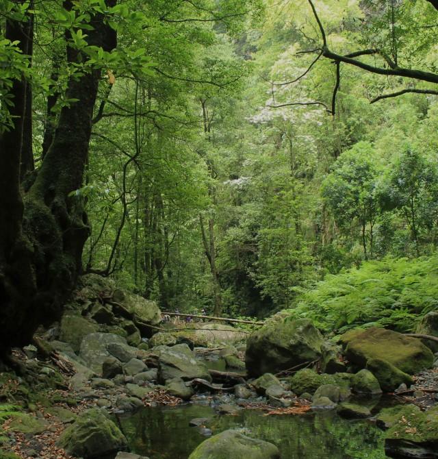 Lurisilva en Portugal