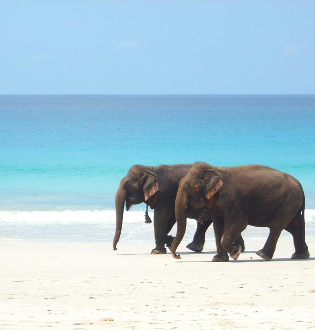 Havelock Island en India