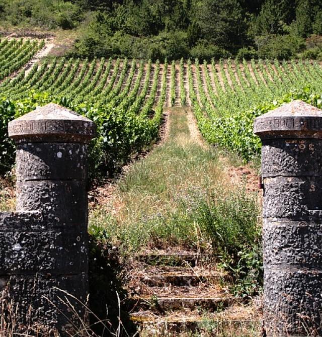Vinos de Borgoña