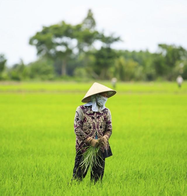 Granjero vietnamita en Vietnam y Camboya