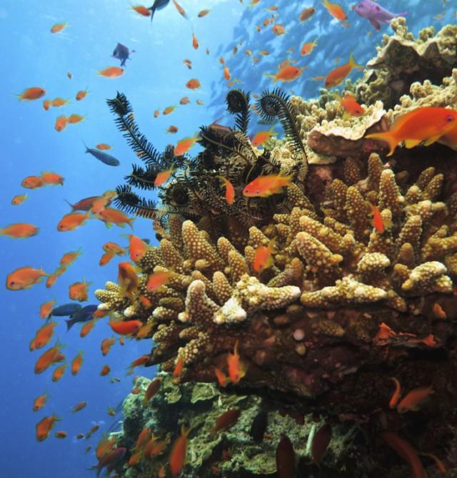 El mayor arrecife de coral del mundo