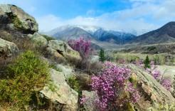 en Macizo de Altai - Rusia