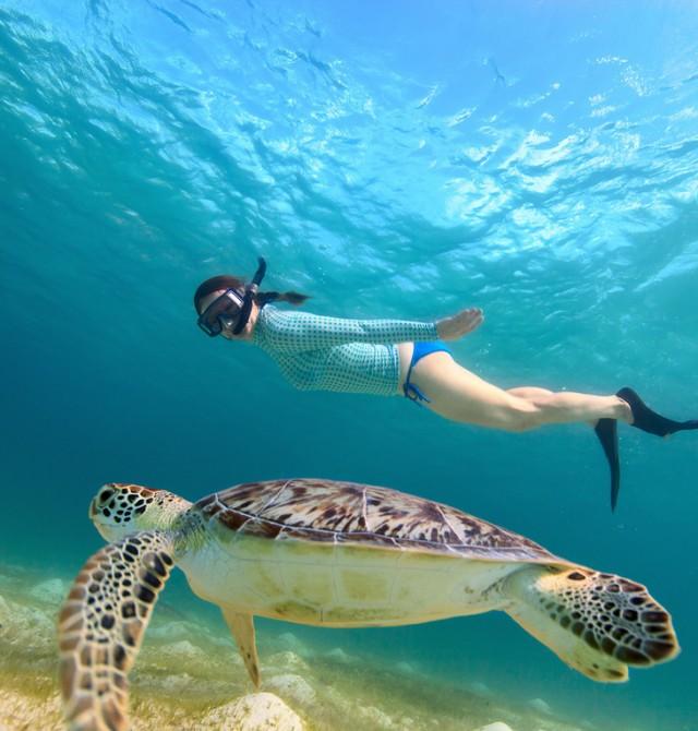 Nadar con tortugas y delfines