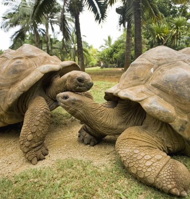 en Seychelles