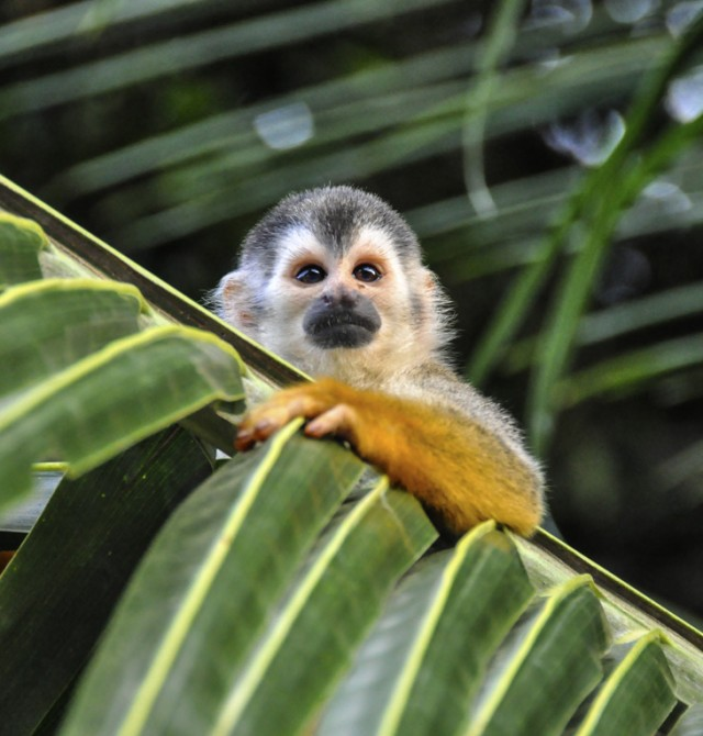 Pura vida en Costa Rica