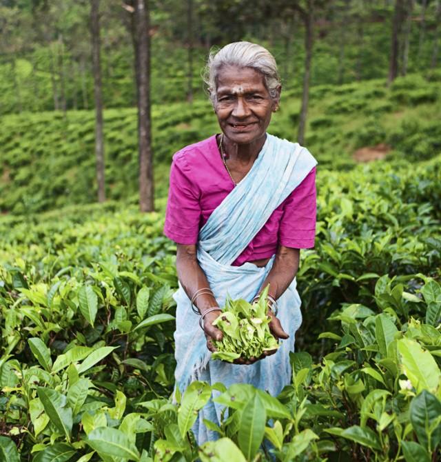 en Sri Lanka y Maldivas