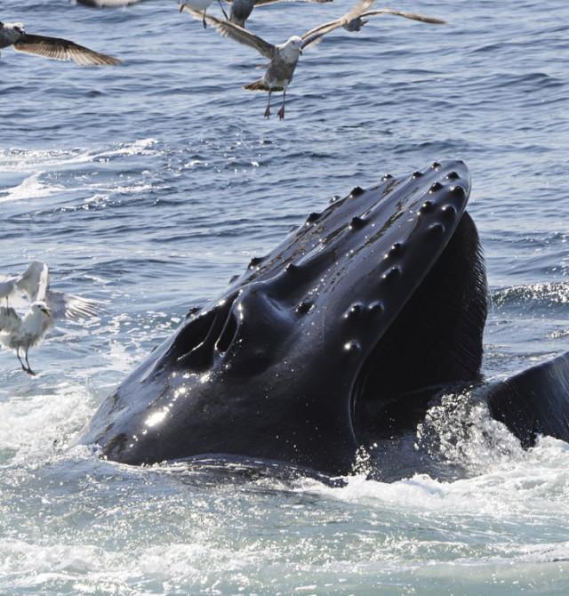 Avistamiento de ballenas en Noruega