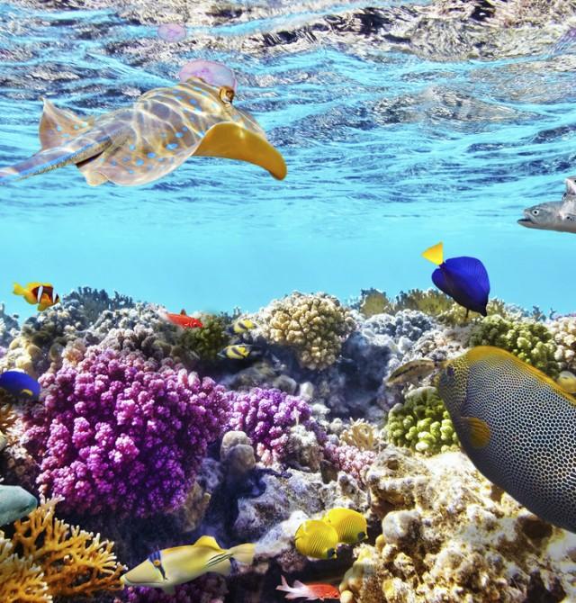Vida submarina con corales