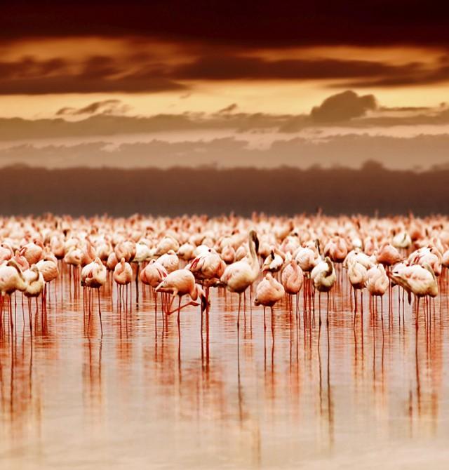Miles de aves en Kenia
