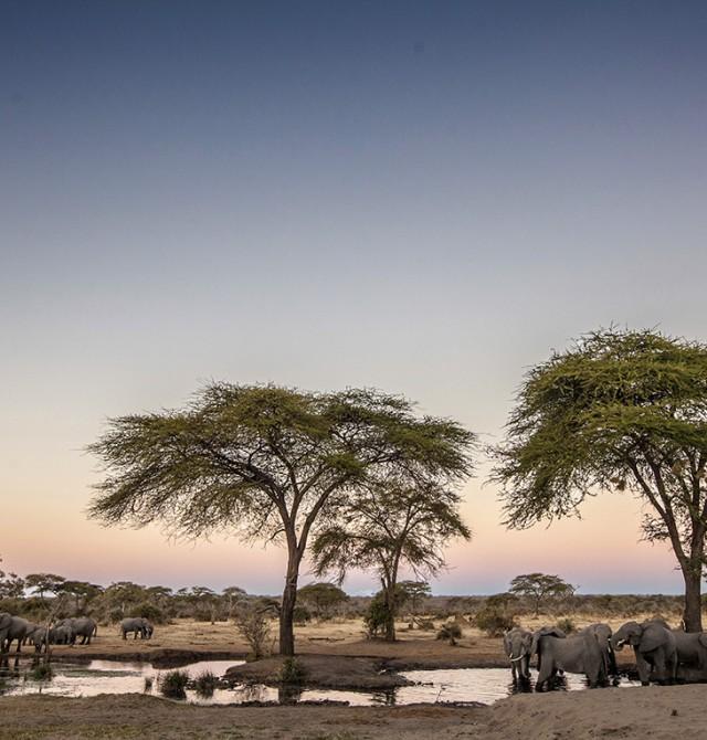...y plantar un árbol en Kenia