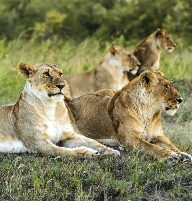 Samburu en Kenia