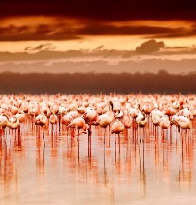 Lago Nakuru en Kenia