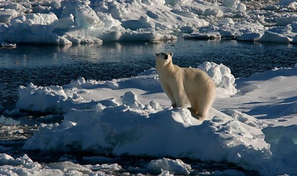 El gran oso polar. Viaje a Noruega con PANGEA The Travel Store