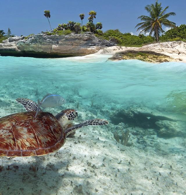 Extensión Riviera Maya en Estados Unidos
