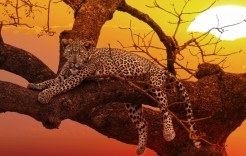 Parque Kruger, Sudáfrica en Sudáfrica