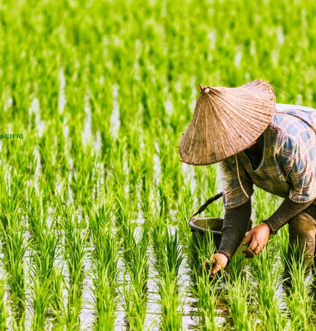 en Vietnam y Camboya