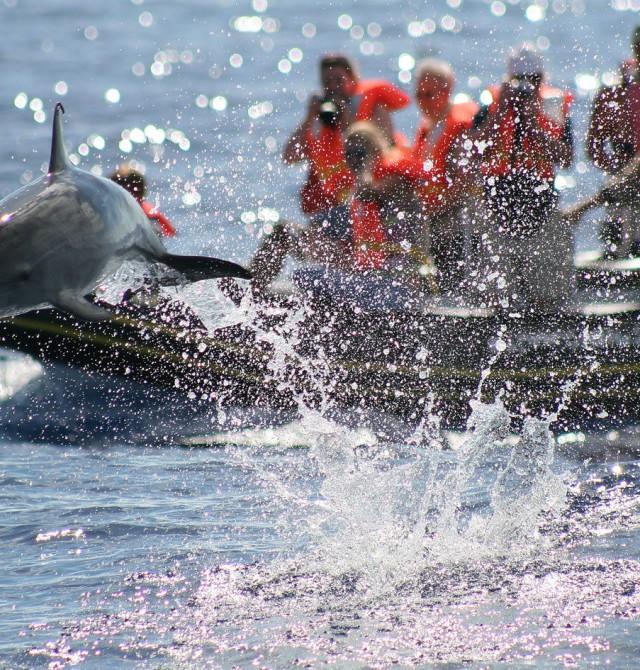 Observación de cetáceos en Azores
