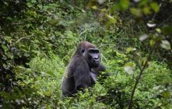 Viaje a Gabón en Gabón