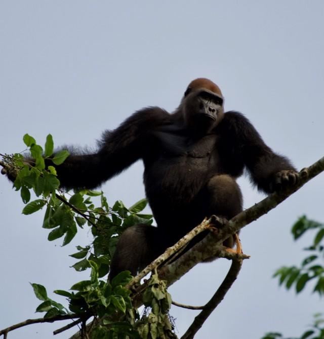 Parque Nacional Loango