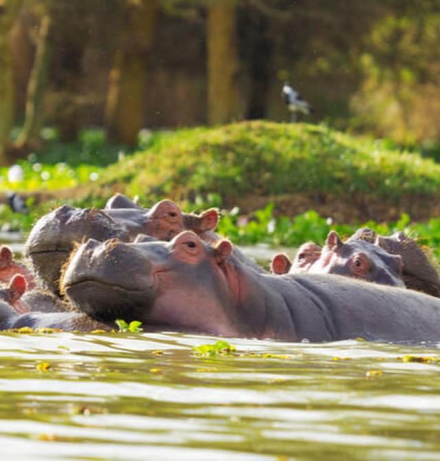 Lago Naivasha en Kenia