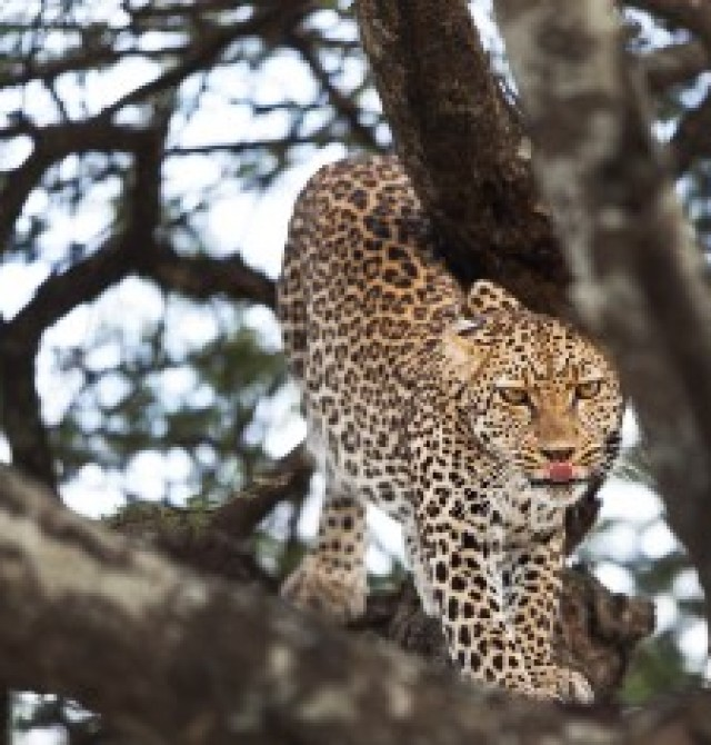 Área de Ngorongoro