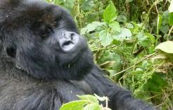 en Uganda