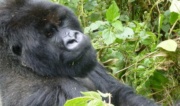 . Viaje a Uganda, Ruanda y Congo con PANGEA The Travel Store