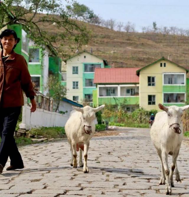 Población local  en Corea del Norte