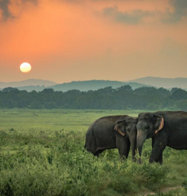 Parque Nacional Minneriya en Sri Lanka