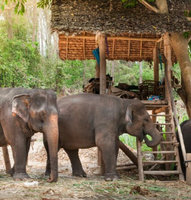 Valle de elefantes en Chiang Mai