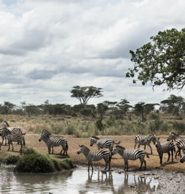 Gran Ecosistema del Serengeti