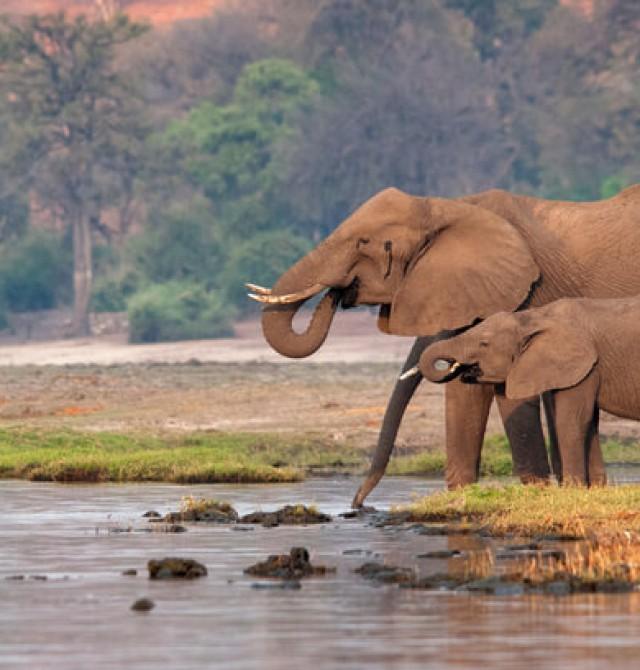 Los gigantes de Chobe