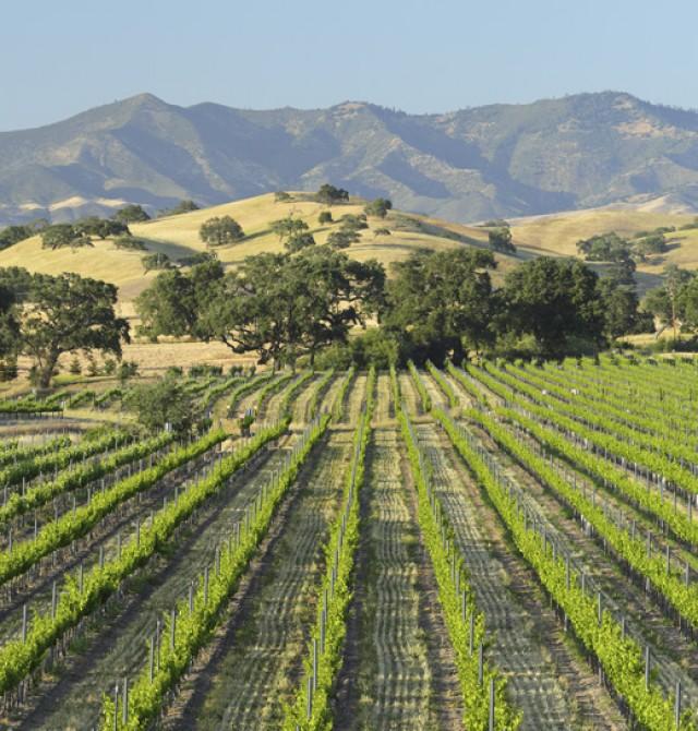 Los viñedos de Santa Bárbara en Estados Unidos