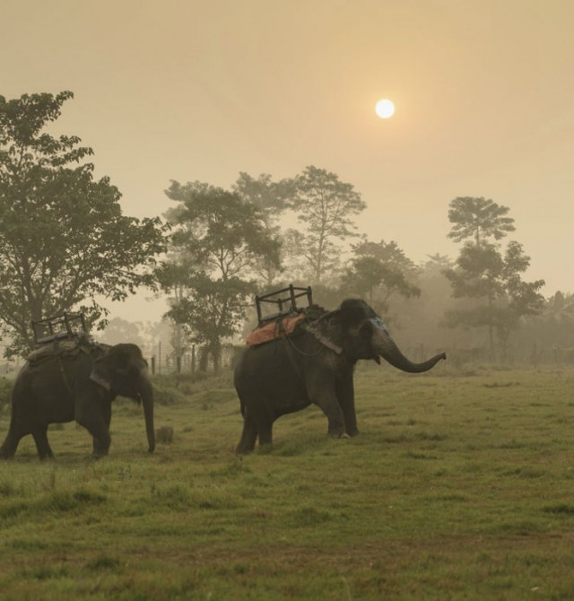 Parque Nacional de Chitwan en Nepal