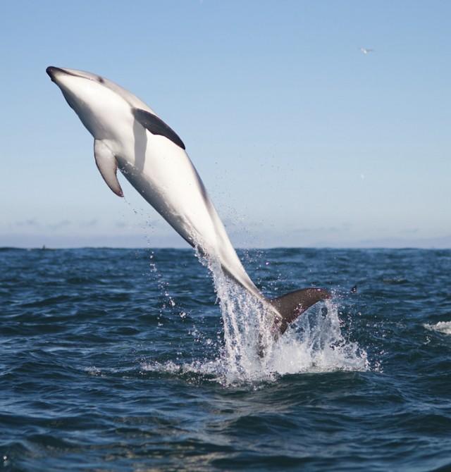 Un observatorio privilegiado de especies marinas en Nueva Zelanda