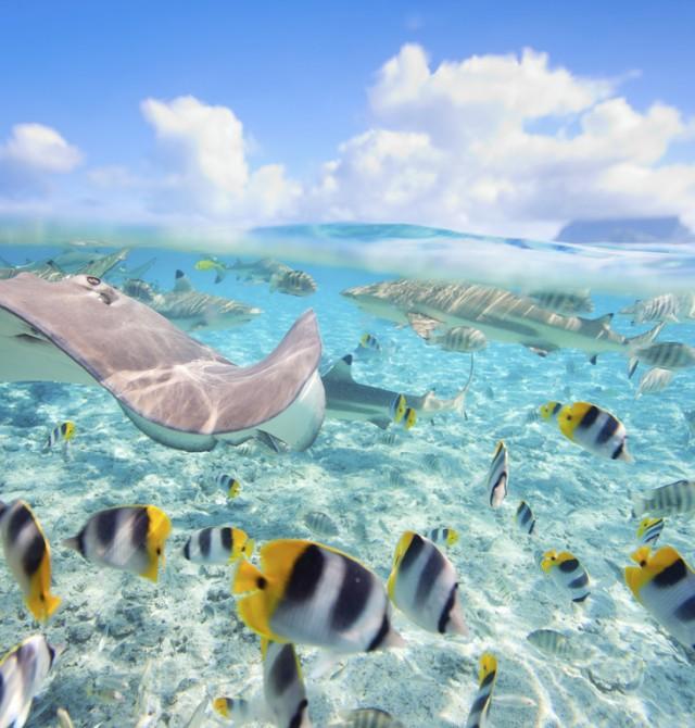 Mundo submarino en Bora Bora en Polinesia