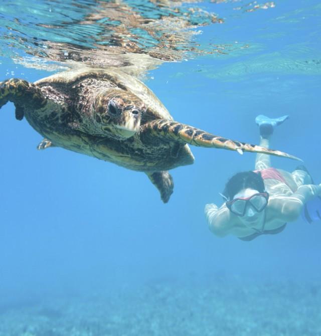 Inolvidables horas de buceo en aguas cristalinas  en Polinesia