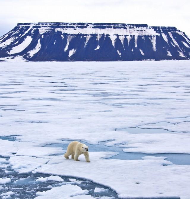 Avistamiento de osos polares en Svalbard