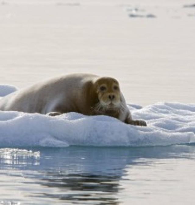 Longyearbyen  en Svalbard