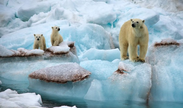 . Viaje a Svalbard con PANGEA The Travel Store